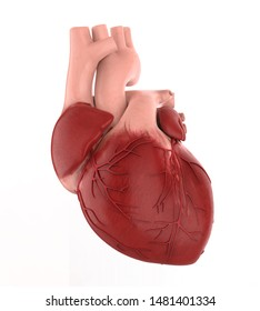 Human Heart Isolated. 3D rendering