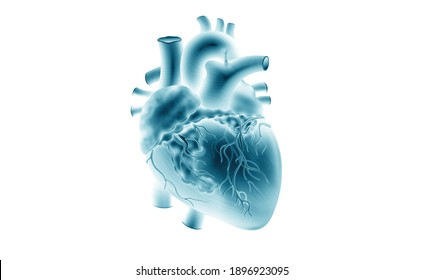 Human heart model. X-ray picture. 3d illustration on isolated background. Medicine, biology, cardiology, transplantology