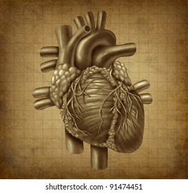 Human heart in old vintage grunge parchment texture as a medical symbol of the blood pumping cardiac inner organ as a health and medicine concept for cardiovascular treatment of diagnosis.