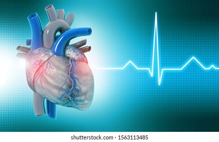 Human heart on medical background. 3d illustration