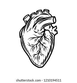 Heart Organ Drawing Images Stock Photos Vectors Shutterstock