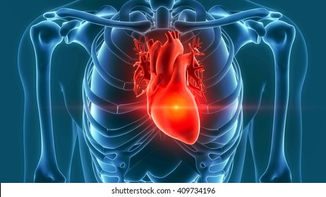 human heart pain 3d rendering