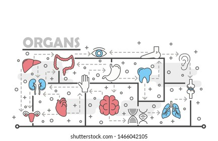 Human internal organs and body parts poster banner template. Lungs liver kidneys joints tooth brain heart colon stomach uterus eye ear leg. Thin line art flat icons for web, printed materials.