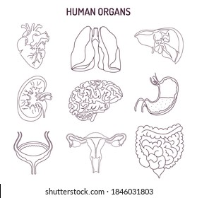 Human internal organs collection. Sketch medical symbols isolated on white illustration. Hand drawn line art icons set