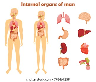Human internal organs icon set.  illustration in cartoon style isolated on white background
