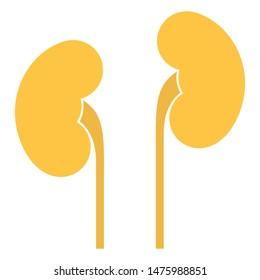 Human internal organs: kidneys and ureters. Flat design
