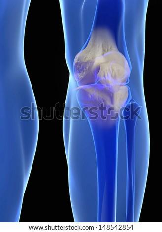 Human Knee Anatomy Femur Tibia Fibula Stock Illustration 148542854