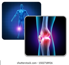 Human Knee body joint pain concept as a skeleton and muscle anatomy of the body as a painful leg injury or arthritis illness symbol with 3D illustration elements.