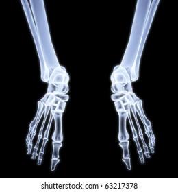 human legs under X-rays. 3d image.