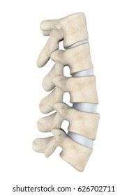 Human Lumbar Spine Anatomy Isolated. 3D rendering
