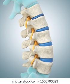 Human lumbar spine model demonstrating normal discs. 3D illustration