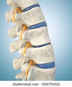 Human lumbar spine model demonstrating thinned disc. 3D illustration