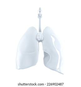 Human Lungs. 3d render. Isolated over white, contains clipping path.