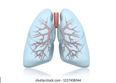Human lungs anatomy 3d render