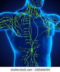 Human Lymphatic System Illustration. 3D rendering