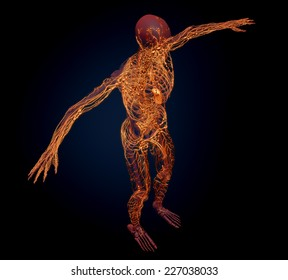 Human lymphatic system - medical illustration