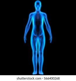 Human Male Muscle Body. 3D