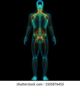 Human Nervous System Anatomy. 3D