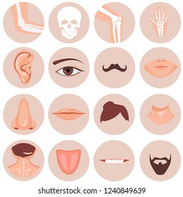 Human nose, ear, mouth mustache hair and eye neck back tongue tooth thoart clavicle lips beards knee elbow wrist set, illustration