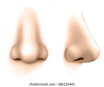 human nose isolates on white background