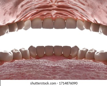 Human oral cavity. Inside an open mouth. Jaw with teeth inside view. Healthy teeth. Dental care and orthodontic concept. 3D rendering