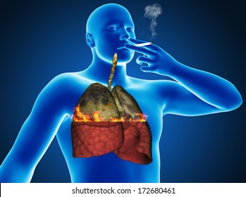 Human organs lungs