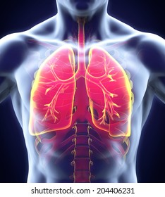 human respiratory system 260nw 204406231 64,118 human human lung images royalty free stock photos on