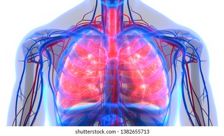 Respiratory System Images, Stock Photos & Vectors | Shutterstock