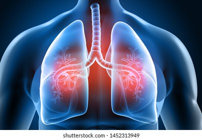 Human respiratory system, lungs anatomy. 3d illustration