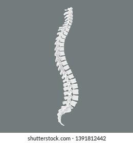 Human ridge. Spine symbol scoliosis design icon