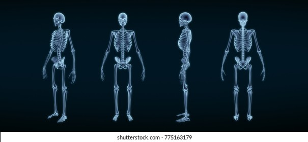 Human Skeleton Anatomy X-ray 3D rendering
