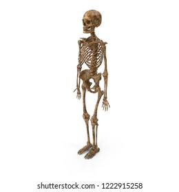 Human skeleton dirty posing isolated. 3D illustration