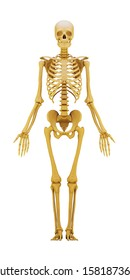 human skeleton isolated on a white. 3d render