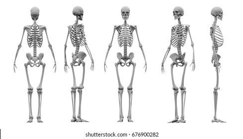Human skeleton set 3d rendering