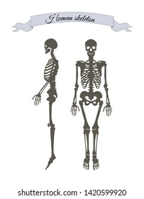 Human skeleton system banner with headline in ribbon organism structure made of bones collection raster illustration isolated on white background