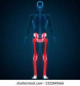 Human Skeleton System Lower Limbs Anatomy. 3D
