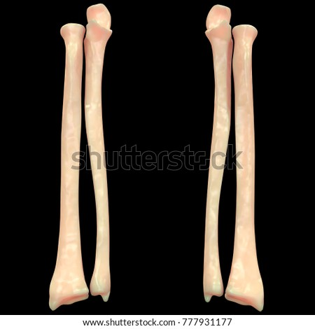Ulna Diagram Posterior View Car Wiring Diagrams Explained