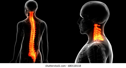 Cervical Spine Images, Stock Photos & Vectors | Shutterstock