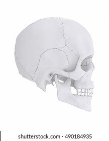 Human skull with colorized skull bone parts lateral view