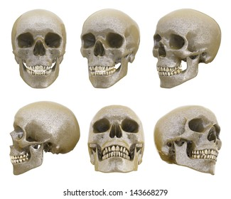 Human skull from different angles isolated
