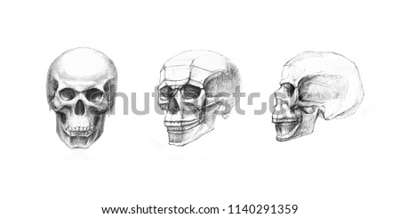 Human skull in front, profile and side view. Pencil drawing isolated on white background. Body anatomy, medical illustration.