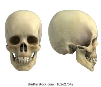 human skull front and side view isolated on white background