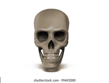 Human skull front view on white background