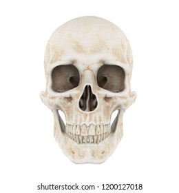 Human Skull Isolated (front view). 3D rendering