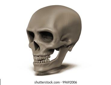 Human skull three quarter view on white background