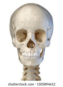 Human skull viewed from the front. computer 3d artwork. On white background.
