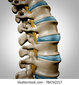 Human spine anatomy section and spinal concept as medical health care body symbol with the skeletal bone structure and intervertebral discs closeup as a 3D illustration.