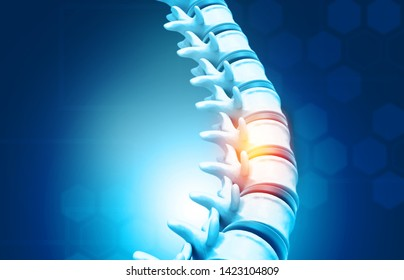 Human spine, vertebrae anatomy on science background. 3d illustration