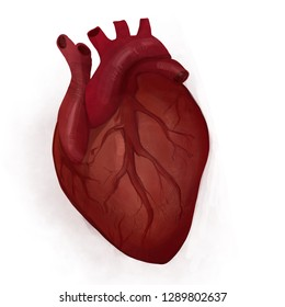 Humans heart in real life