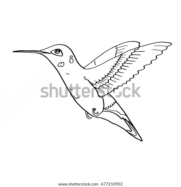 Hummingbird Coloring Stock Illustration 677210902
